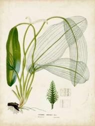 Tropical Grass II Digital Print by Vision Studio,Decorative