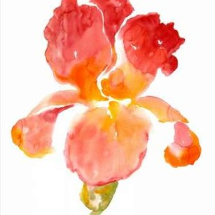 Sunset Blooms I Digital Print by O'Toole, Tim,Decorative