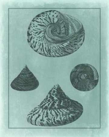 Spa Shell Collection II Digital Print by Vision Studio,Decorative