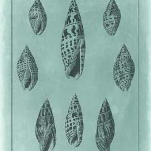 Spa Shell Collection IV Digital Print by Vision Studio,Decorative