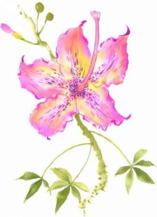 Hibiscus Flower IV Digital Print by Rae, Nan,Decorative