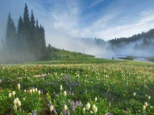Mt. Rainier Wildflowers Digital Print by Hu, Yiming,Impressionism