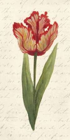 Twin Tulips II Digital Print by Popp, Grace,Decorative