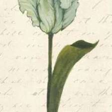 Twin Tulips V Digital Print by Popp, Grace,Decorative