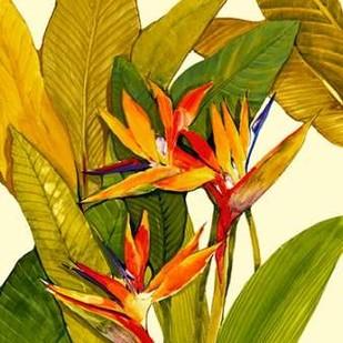 Tropical Bird of Paradise Digital Print by O'Toole, Tim,Impressionism