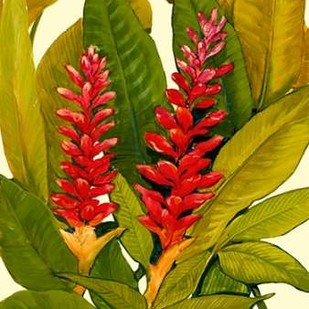 Tropical Red Ginger Digital Print by O'Toole, Tim,Impressionism