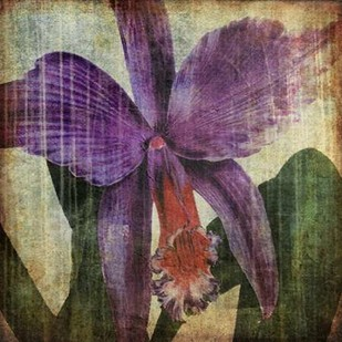 Pacific Orchid II Digital Print by Butler, John,Decorative