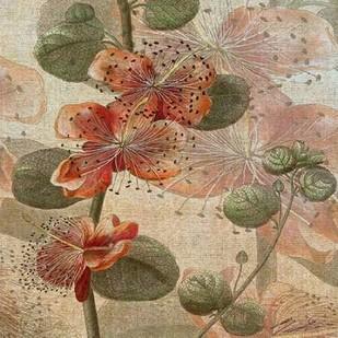 Desert Botanicals I Digital Print by Butler, John,Decorative