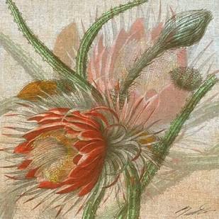 Desert Botanicals II Digital Print by Butler, John,Decorative