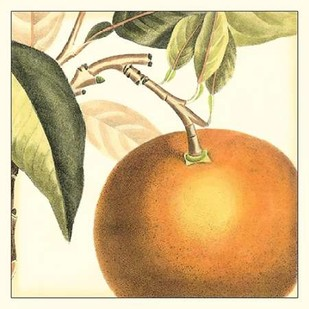 Graphic Orange Digital Print by Vision Studio,Decorative