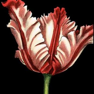 Vibrant Tulips II Digital Print by Harper, Ethan,Decorative