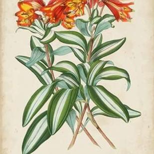 Tropical Array III Digital Print by Van Houtteano, Horto,Decorative