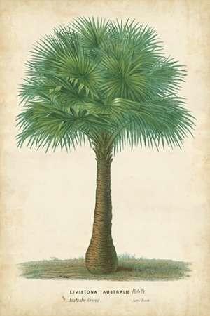 Palm of the Tropics I Digital Print by Van Houtteano, Horto,Decorative