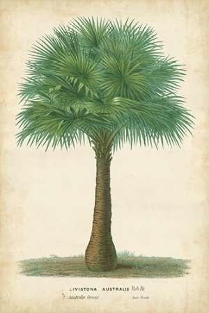 Palm of the Tropics I Digital Print by Van Houtteano, Horto,Decorative