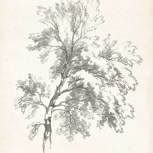 Ash Tree Study Digital Print by Unknown,Decorative
