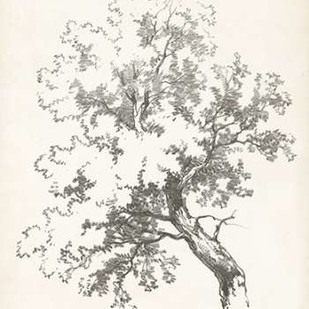 Oak Tree Study Digital Print by Unknown,Illustration