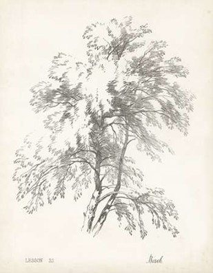 Birch Tree Study Digital Print by Unknown,Illustration