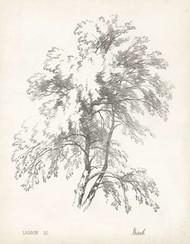 Birch Tree Study Digital Print by Unknown,Illustration