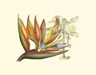 Bird of Paradise II Digital Print by Edwards, Sydenham,Decorative