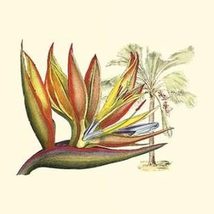 Bird of Paradise II Digital Print by Edwards, Sydenham,Decorative
