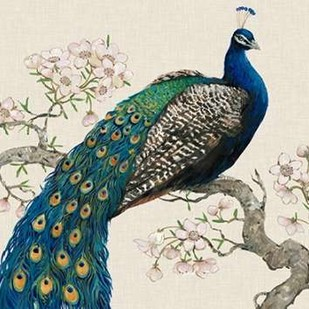 Peacock and Blossoms I Digital Print by O'Toole, Tim,Decorative