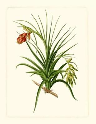 Exotic Flora III Digital Print by Vision Studio,Decorative