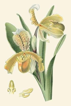 Delicate Orchid IV Digital Print by Vision Studio,Decorative