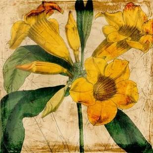 Vibrant Floral V Digital Print by Vision Studio,Decorative