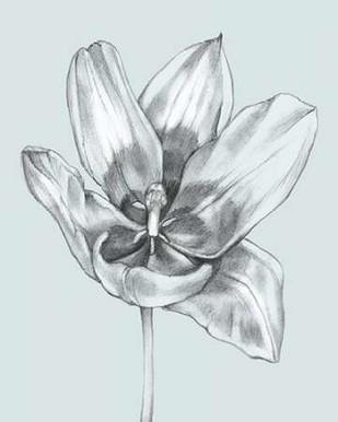 Silvery Blue Tulips II Digital Print by Goldberger, Jennifer,Illustration