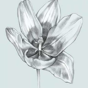 Silvery Blue Tulips II Digital Print by Goldberger, Jennifer,Illustration