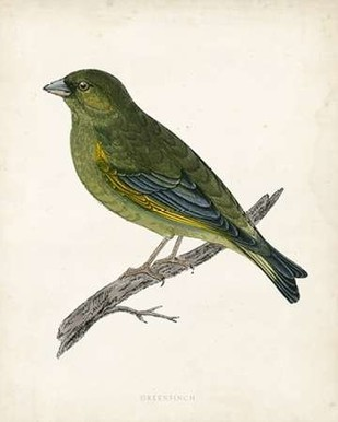 Morris Greenfinch Digital Print by Morris,Decorative