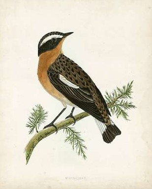 Morris Whinchat Digital Print by Morris,Decorative
