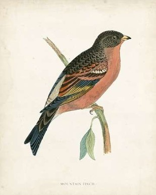 Morris Mountain Finch Digital Print by Morris,Decorative