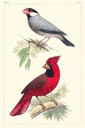 Lemaire Birds I Digital Print by Lemaire, C.L.,Decorative