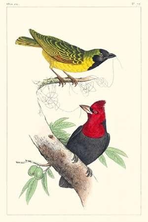 Lemaire Birds II Digital Print by Lemaire, C.L.,Decorative