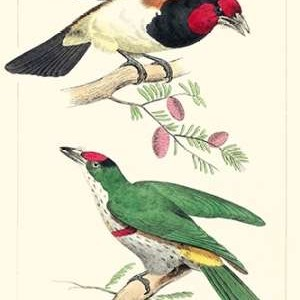 Lemaire Birds III Digital Print by Lemaire, C.L.,Decorative