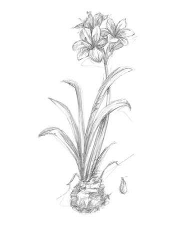 Botanical Sketch II Digital Print by Harper, Ethan,Illustration