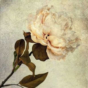 Lush Vintage Florals II Digital Print by Malek, Honey,Impressionism