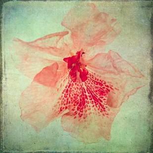 Lush Vintage Florals VI Digital Print by Malek, Honey,Decorative
