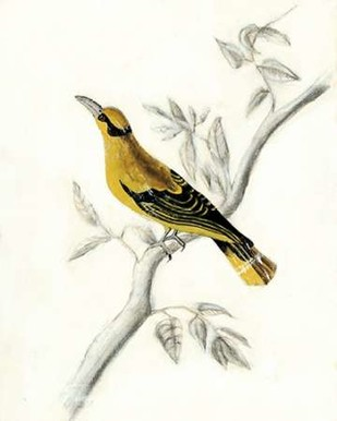 Rustic Aviary II Digital Print by McCavitt, Naomi,Decorative