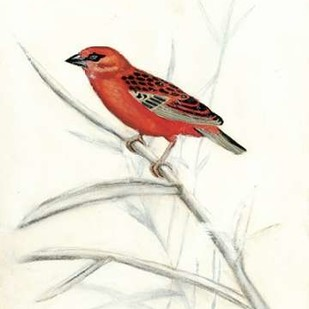 Rustic Aviary IV Digital Print by McCavitt, Naomi,Impressionism