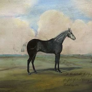 The Kicker- A Steel Grey Racehorse Digital Print by McCavitt, Naomi,Impressionism