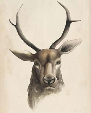 Watercolor Animal Study I Digital Print by Popp, Grace,Impressionism