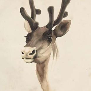 Watercolor Animal Study III Digital Print by Popp, Grace,Impressionism
