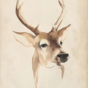 Watercolor Animal Study IV Digital Print by Popp, Grace,Impressionism