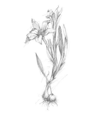 Botanical Sketch I Digital Print by Harper, Ethan,Illustration