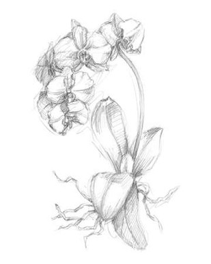Botanical Sketch V Digital Print by Harper, Ethan,Illustration