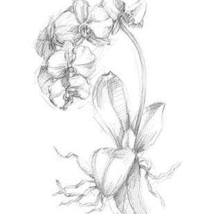 Botanical Sketch V Digital Print by Harper, Ethan,Illustration