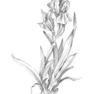 Botanical Sketch VI Digital Print by Harper, Ethan,Illustration