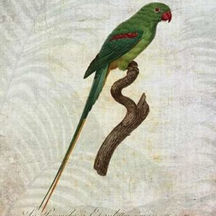 Parrot Jungle III Digital Print by Butler, John,Impressionism